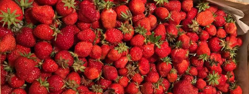 cueillette de fraises ferme fruirouge