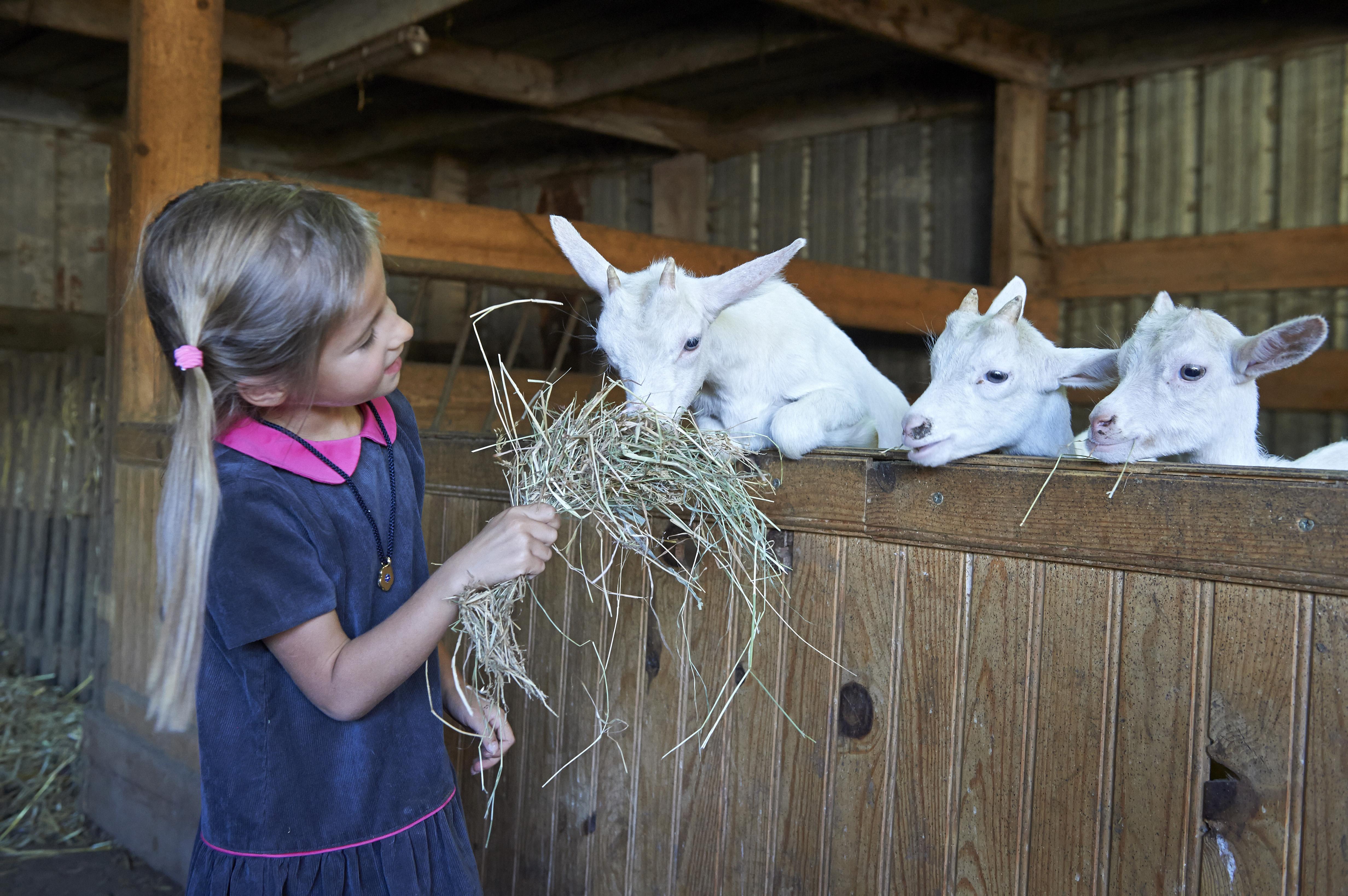 Des moments privilégiés avec les animaux